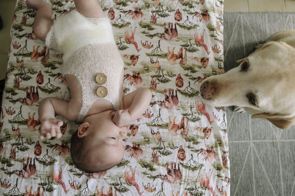 bebé con mascota