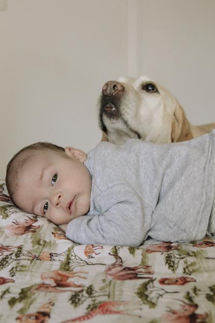 bebé y mascota 5